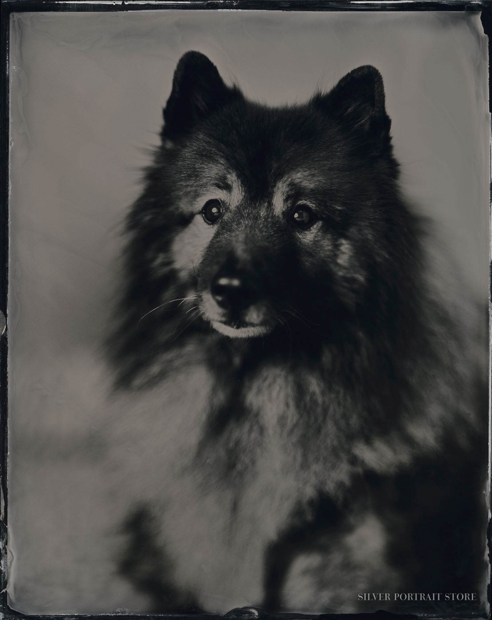 Kasper-Silver Portrait Store-Scan from Wet plate collodion-Tintype 20 x 25 cm.